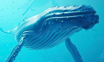 Beyond Blue : un trailer de lancement qui nous plonge dans les profondeurs des océans