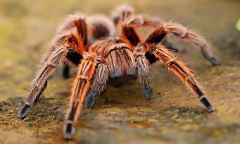 Grounded : les développeurs ont pensé à un mode pour les arachnophobes