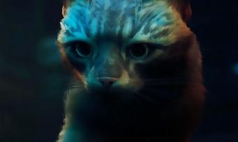 Stray : le jeu où l'on incarne un chat sur PC et consoles PlayStation dévoile son gameplay
