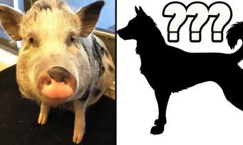 The Last of Us 2 : après les cochons, un autre animal a bénéficié de la motion capture