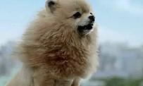 Tokyo Jungle : l'attaque du chihuahua en deux vidéos !